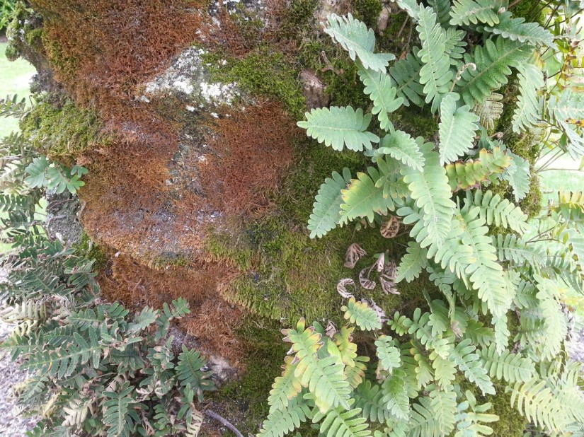 Mosses and lichens live on the trunks and stems of plants that provide nutrients.