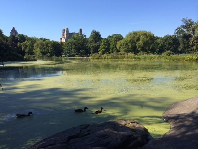 Central Park - Ceder Hill