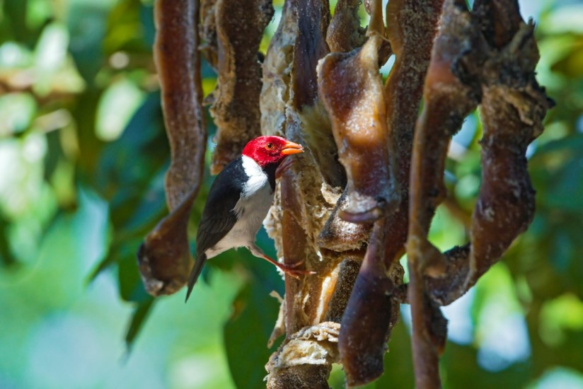 Bird, Nature and meat consumption