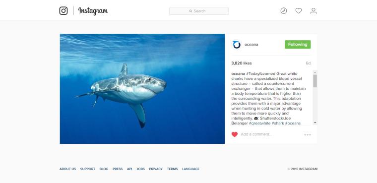 Campaña en redes sobre tiburón - Oceana