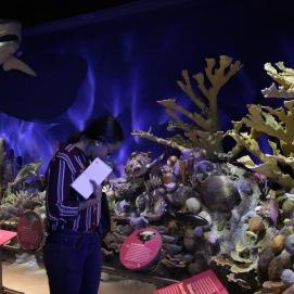 Cuba ha creado la reserva marina más grande del Caribe para proteger los corales.